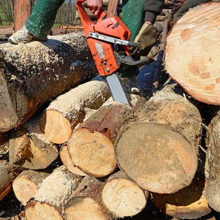 tree felling: Scrap of a log a saw