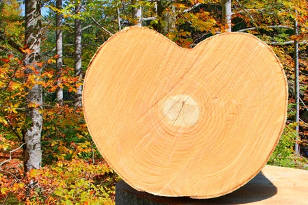 primary product: Cut of a log of a beech