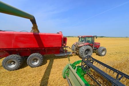 tanker type: Overloading grain harvester into the grain tank of the tractor trailer  Stock Photo