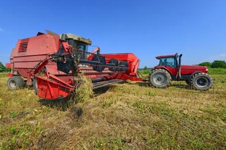 cosechadora: La sobrecarga de colza con un coche del depósito de grano de la cosechadora