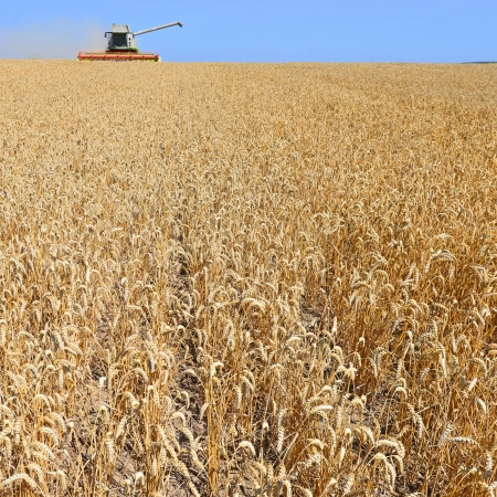 Grain harvesting combine Stock Photo - 21491318
