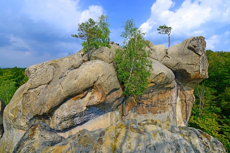broad leaved tree: Cliffs above the forest under a blue sky with clouds