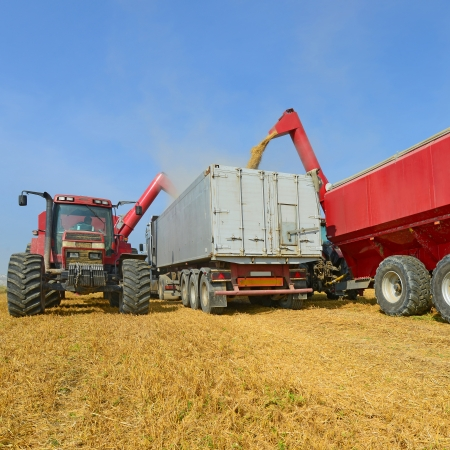 Overloading grain silo with a tractor in a car photo