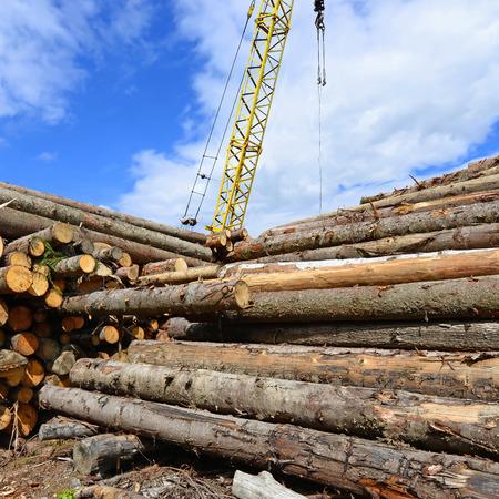 storing: Wood preparation