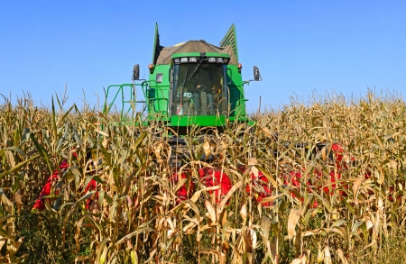 Corn harvesting combine photo