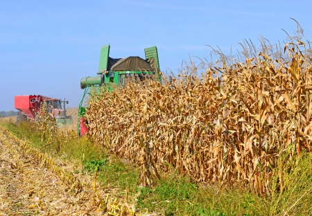agricultural application tractor: At harvest corn