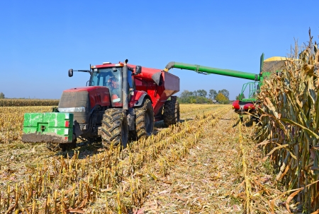 agricultural tenure: At harvest corn