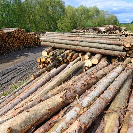 Wood preparation Stock Photo - 23249969