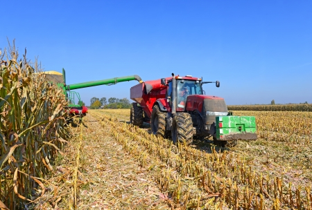 combining: At harvest corn