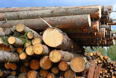 Wood preparation Stock Photo - 23461525
