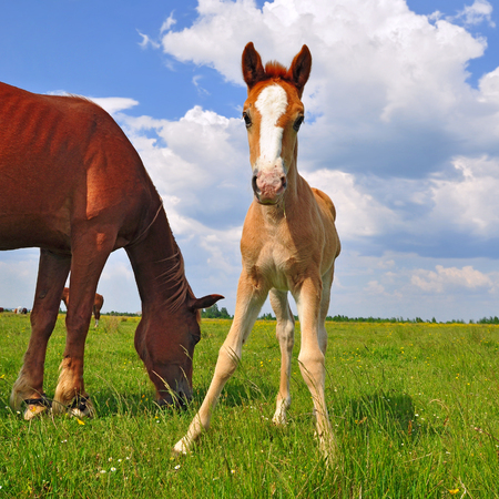 cohort: Foal on a summer pasture Stock Photo