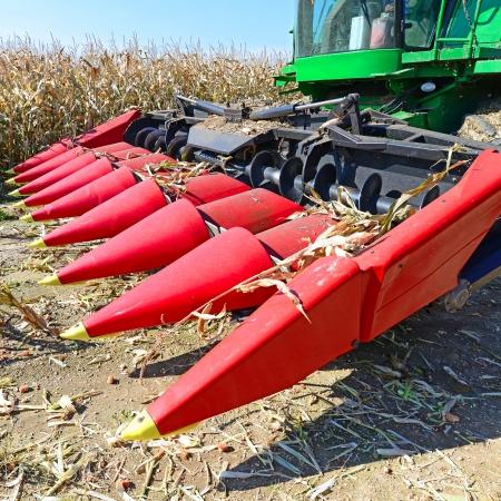 tanker type: Maize grain harvester to gather corn Stock Photo
