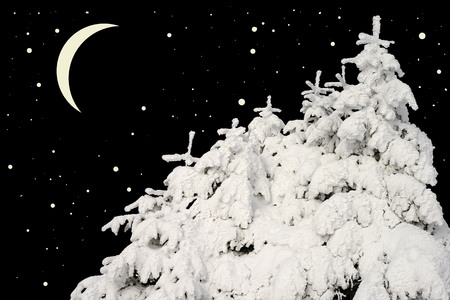 acerose leaf: Firs under snow against the night sky with the moon