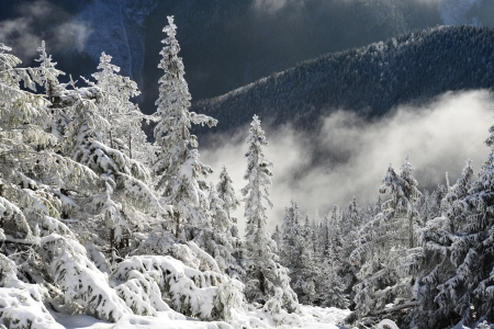 Winter in mountains photo