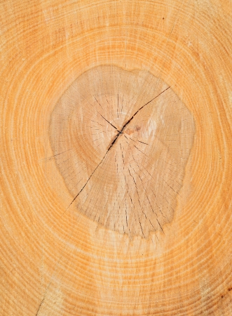 forest products: Cut of a log of a beech
