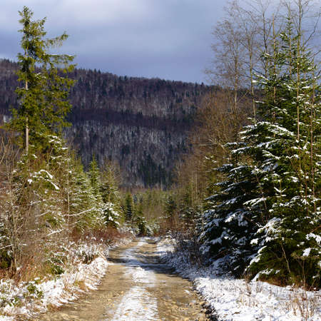 macadam: Gravel road to a wood landscape