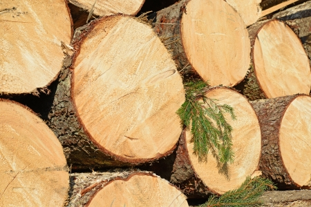 Wood preparation Stock Photo - 24599714