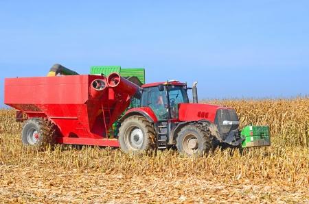 agricultural tenure: At harvest corn