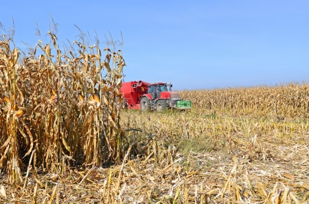 agricultural tenure: A tractor with a trailer to transport the grain to harvest corn  Stock Photo
