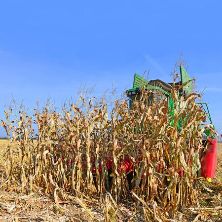 Corn harvesting combine photo
