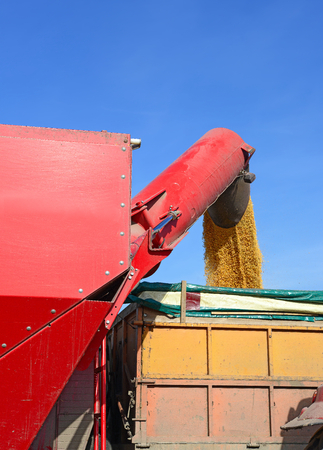 agricultural tenure: Overloading of maize from the hopper to the tractor vehicle
