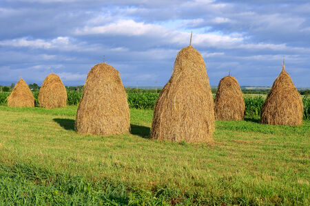 haymaking: Hay in stacks Stock Photo