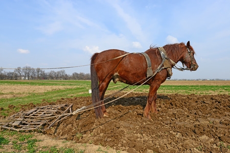 cultivator: Horse on a spring field