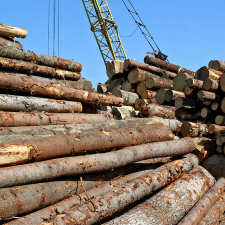 logging:   Logging industry  Stock Photo