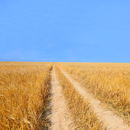 Field road of ripe grain photo