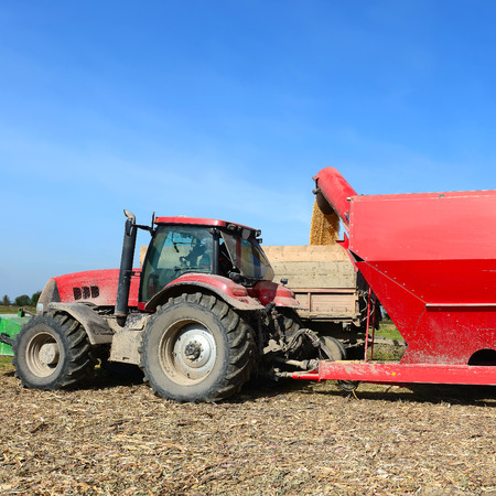 Overloading of maize from the hopper to the tractor vehicle photo
