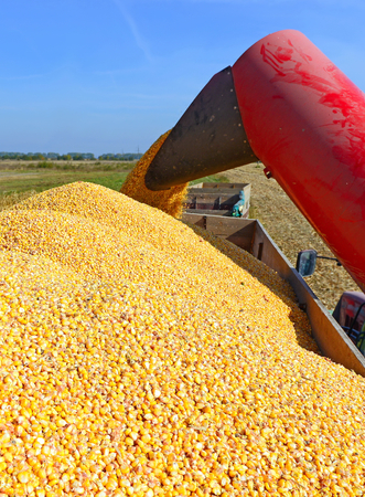 tenure: Overloading of maize from the hopper to the tractor vehicle