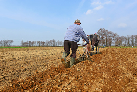 livestock sector: Fallowing of a spring field by a manual plow on horse-drawn
