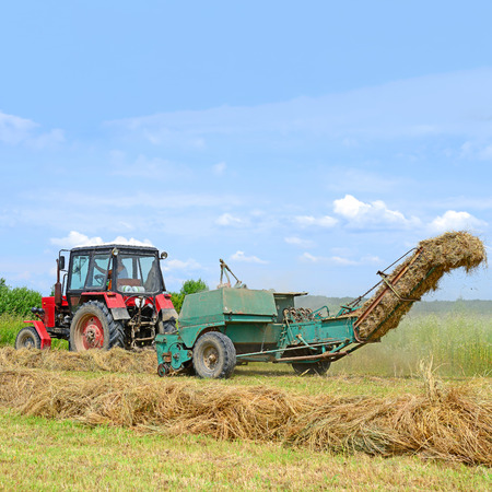 haymaking: Haying
