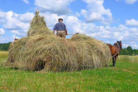 Transportation of hay by a cart photo