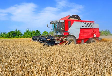 cosechadora: La cosecha de granos se combinan