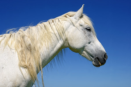 horseflesh: Head of a horse against the sky