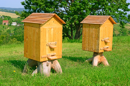nature cure: Bee hive in the summer landscape