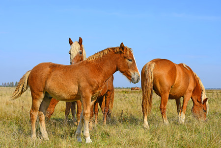 Horses on a summer pasture photo