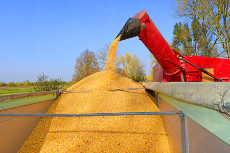 farm implement: Overloading of maize from the hopper to the tractor vehicle.