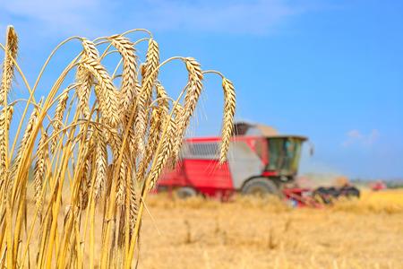 agricultural tenure: Grain field