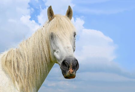 Head of a horse against the sky photo