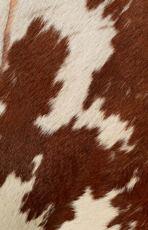 cow hide: Fragment of a skin of a cow Stock Photo