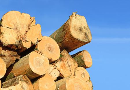wood log: Wood preparation