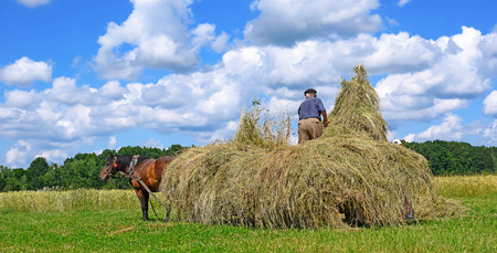 haymaking: Transportation of hay by a cart