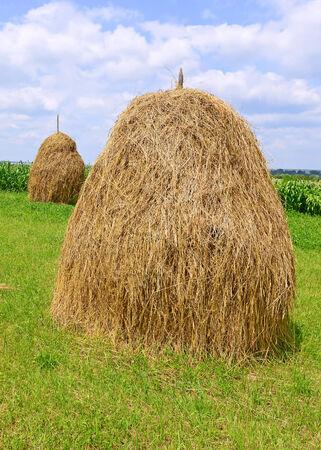 hay: Hay in stacks Stock Photo