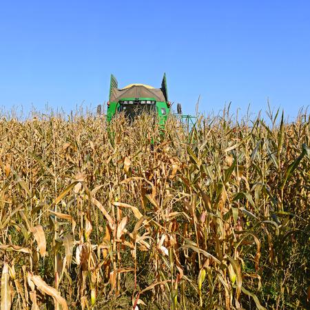 combine: Corn harvesting combine