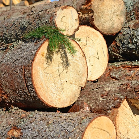 Wood preparation photo