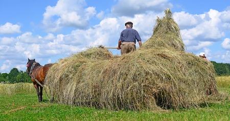 horseflesh: Transportation of hay by a cart