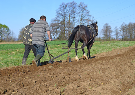 horse traction: Fallowing of a spring field by a manual plow on horse-drawn