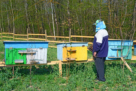 Beekeeper inspects bee hives photo